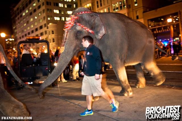12-03_elephants119-128