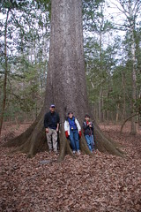 Moffits at the Cherrybark Oak