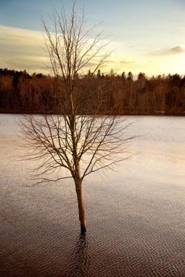 Saint John : Sinking Tree