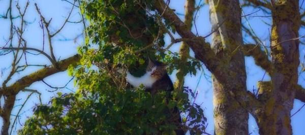 La petite Lili arrivée première dans l'arbre, Aïka est disqualifiée pour comportement anti-sportif