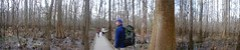 Congaree Boardwalk Panorama 1
