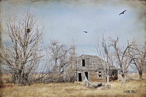 Crows Kingdom