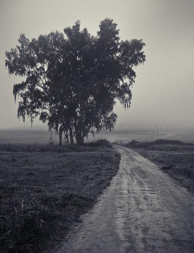 """112/365 """"Esta foto la tenía traspapelada"""" by Flickr Jiménez (Pedro Nog)"""