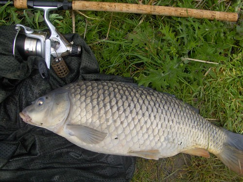 Best fish of the day - a lovely common carp of 9lb by La belle dame sans souci
