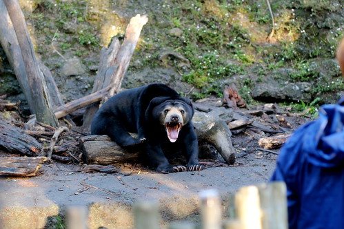 I find Sun Bears odd looking