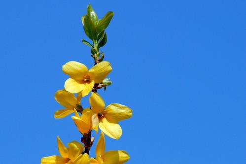 Arbres en fleurs HD-017