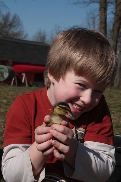Duckling Playpen