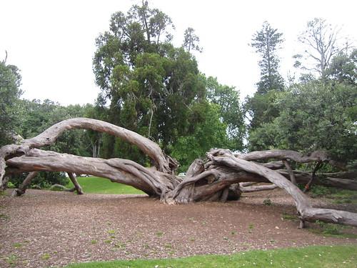 Weird tree at the park
