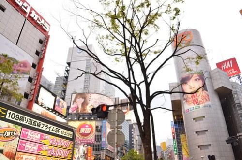 A tree in Shibuya