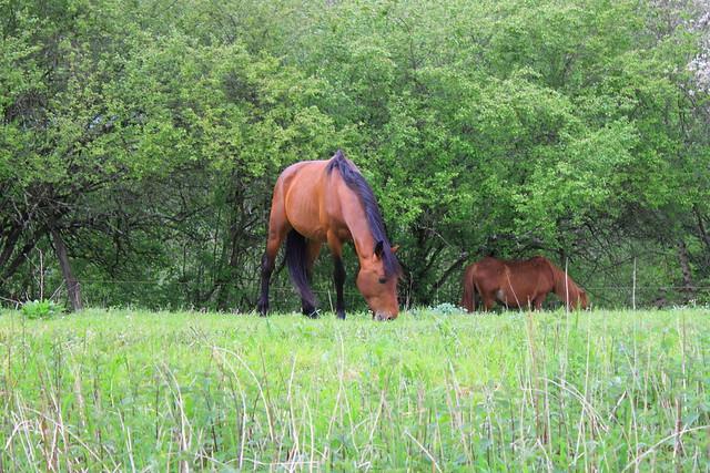 Caballo -Equus ferus caballus  #EH #Photography #Flickr #Foto 13