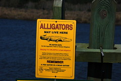 Alligator Warning