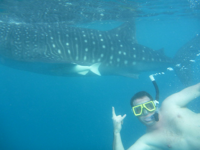 Whale Shark Oslob Cebu Philippines Flickr Photo