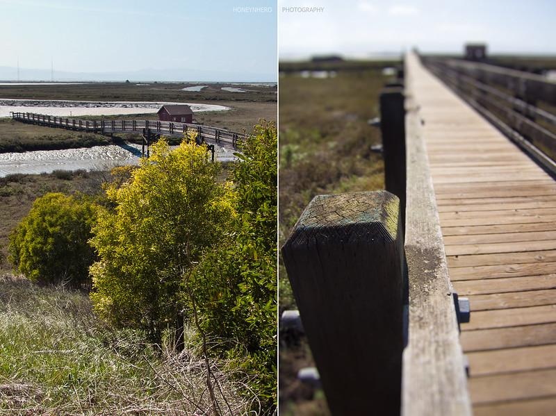 Trail bridge, Don Edwards San Francisco Bay National Wildlife Refuge