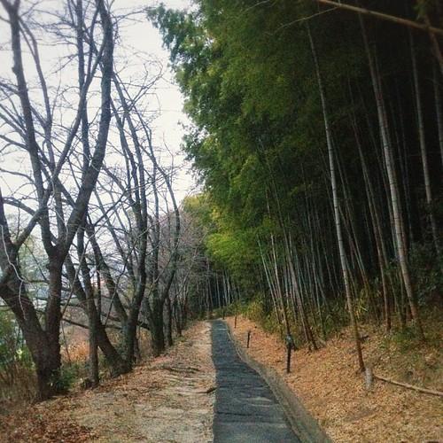 右手が竹林、左手が桜並木。これが毎朝の通勤路です。ʅ(‾◡◝)ʃ  #iphonography #instagram #iphone4s