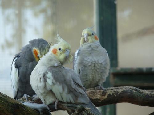 Birdcage in Plantsoen park
