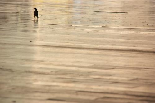 On Feet by vishangshah