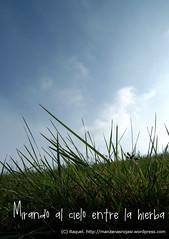 Mirando al cielo entre la hierba