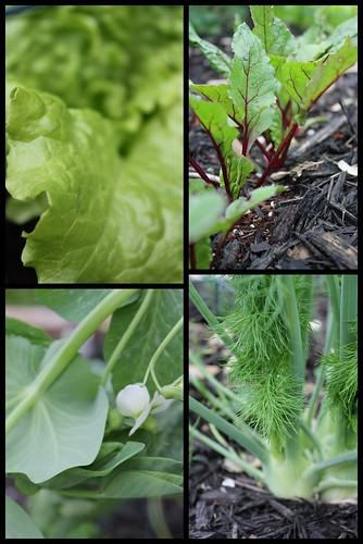 2120429. Early plants.