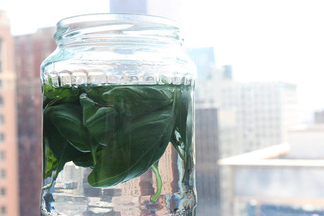 basil-infused vodka