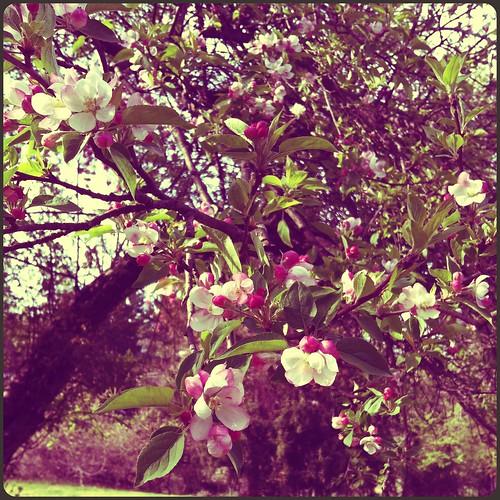 flowers bloom.