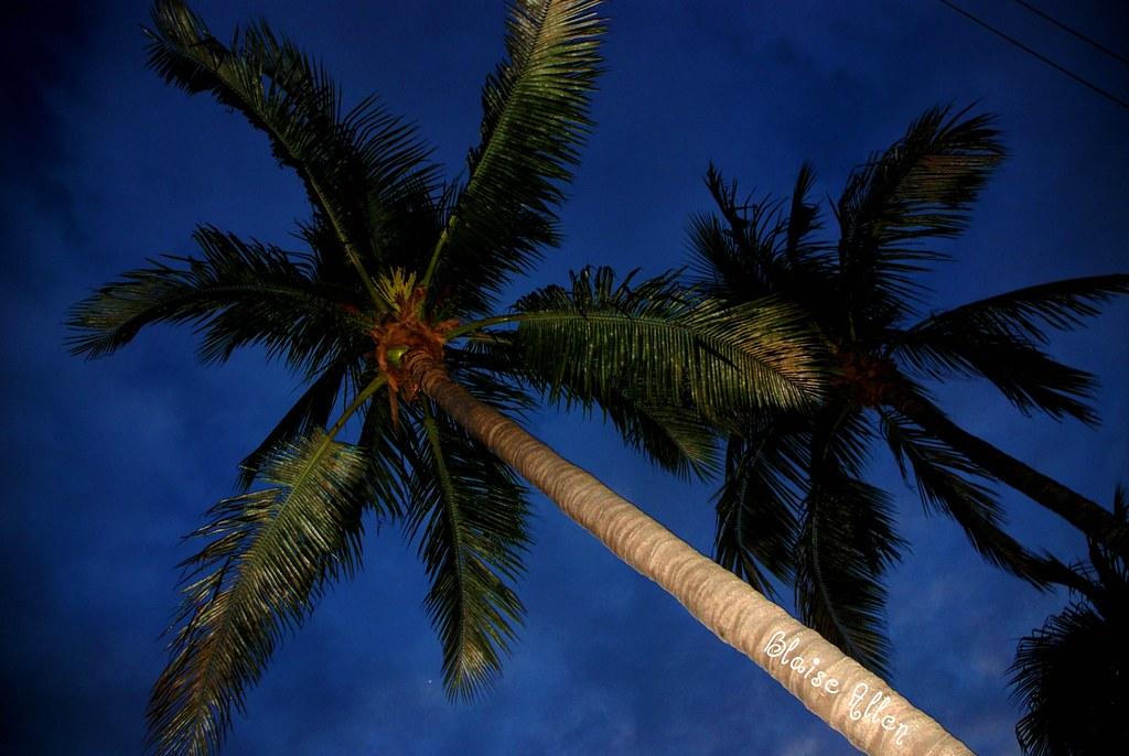 A beautiful night in Fort Lauderdale, FL
