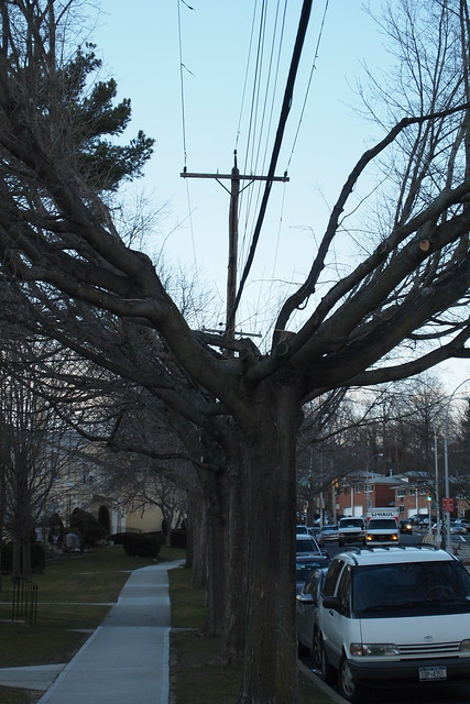 Trees trimmed around the telephone line on Little Neck Parkway
