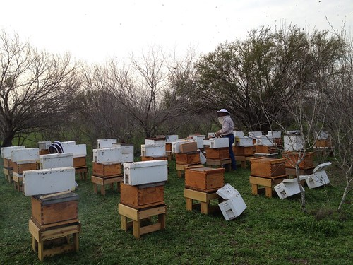 Racing to get the nucs in before dark