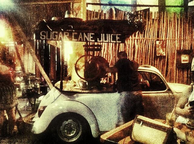 Sugar Cane Beetle