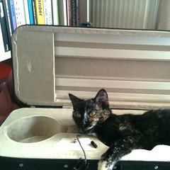 violin-case cat