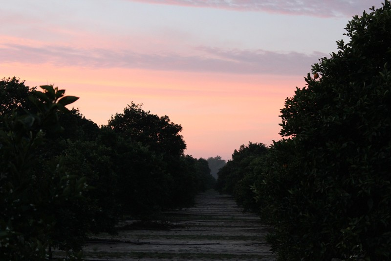 Grove sunrise1