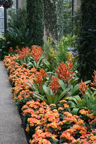 Begonias and Aechmea