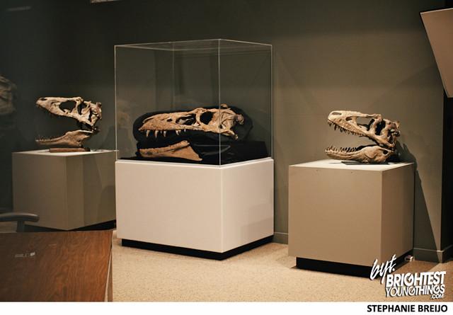 Smithsonian Dinosaur Exhibit Photos Brightest Young Things Stephanie Breijo2