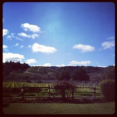 Lovely day in Sonoma