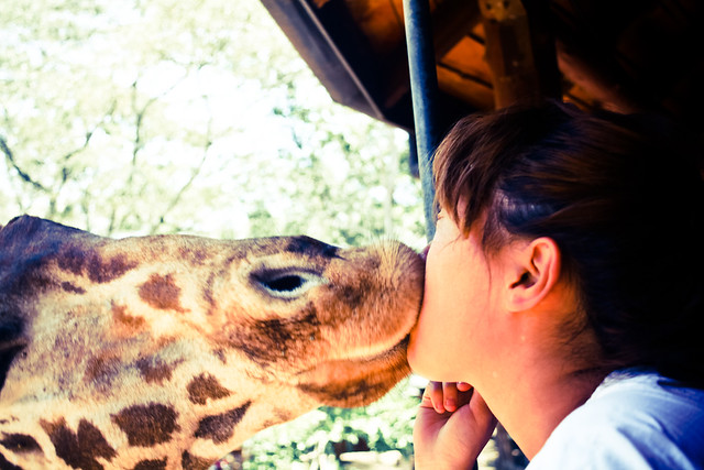 Giraffe Centre (5)