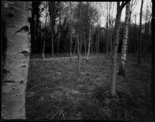 Trees Near and Far, Titan Pinhole - Fomapan 200 by Sibokk