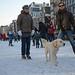 Dog on ice.