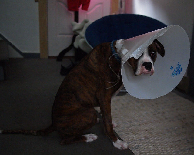 Goomba King & His Cone