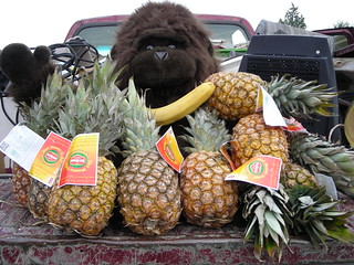Ape and fruits from dumpster