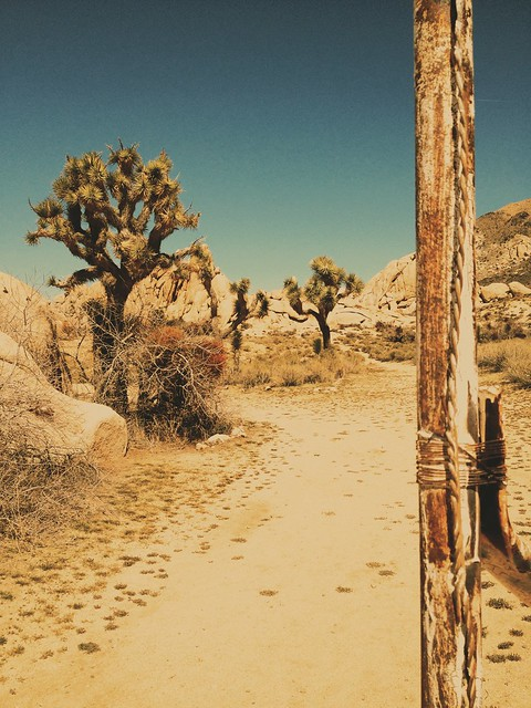 Near Ryan Ranch, Joshua Tree