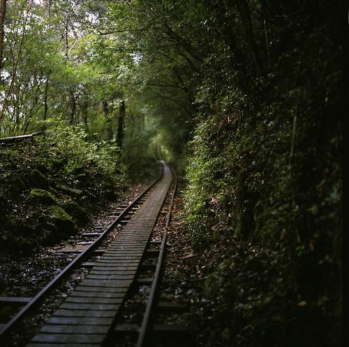 lumbering track