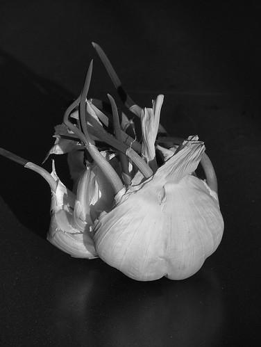 garlic in B&W