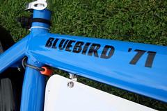 Bullitt Bluebird 71