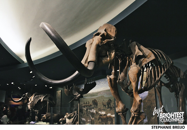 Smithsonian Dinosaur Exhibit Photos Brightest Young Things Stephanie Breijo30
