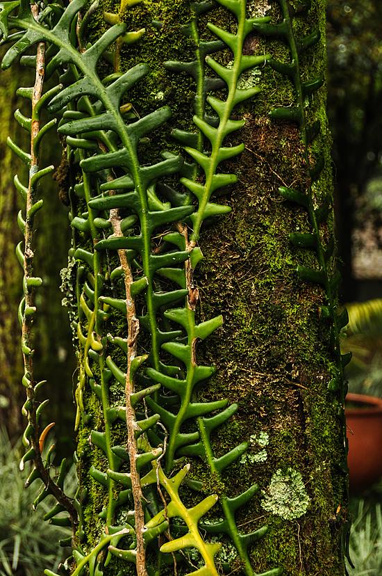 6833719802_ed80189d74_o Jardin Botánico del Quindío - Armenia, Colombia Colombia Zona Cafetera  Zona Cafetera Quindio Nature Mariposario Guadua Garden Colombia Butterfly Botanical Bamboo