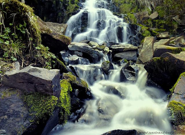 Spring Stream
