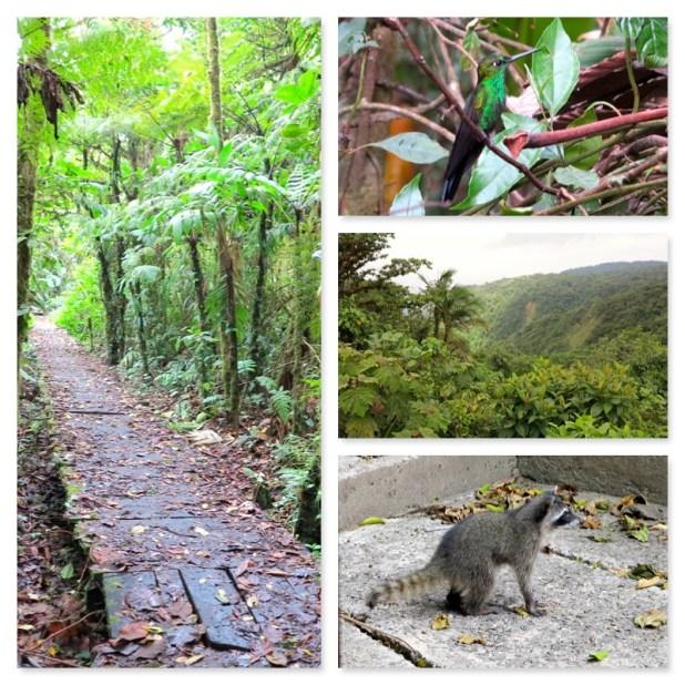 Monteverde Reserva Natural