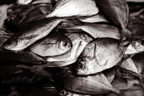 go fish @chinatown #0168