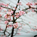 604Photowalk-5_MG_0461-Edit