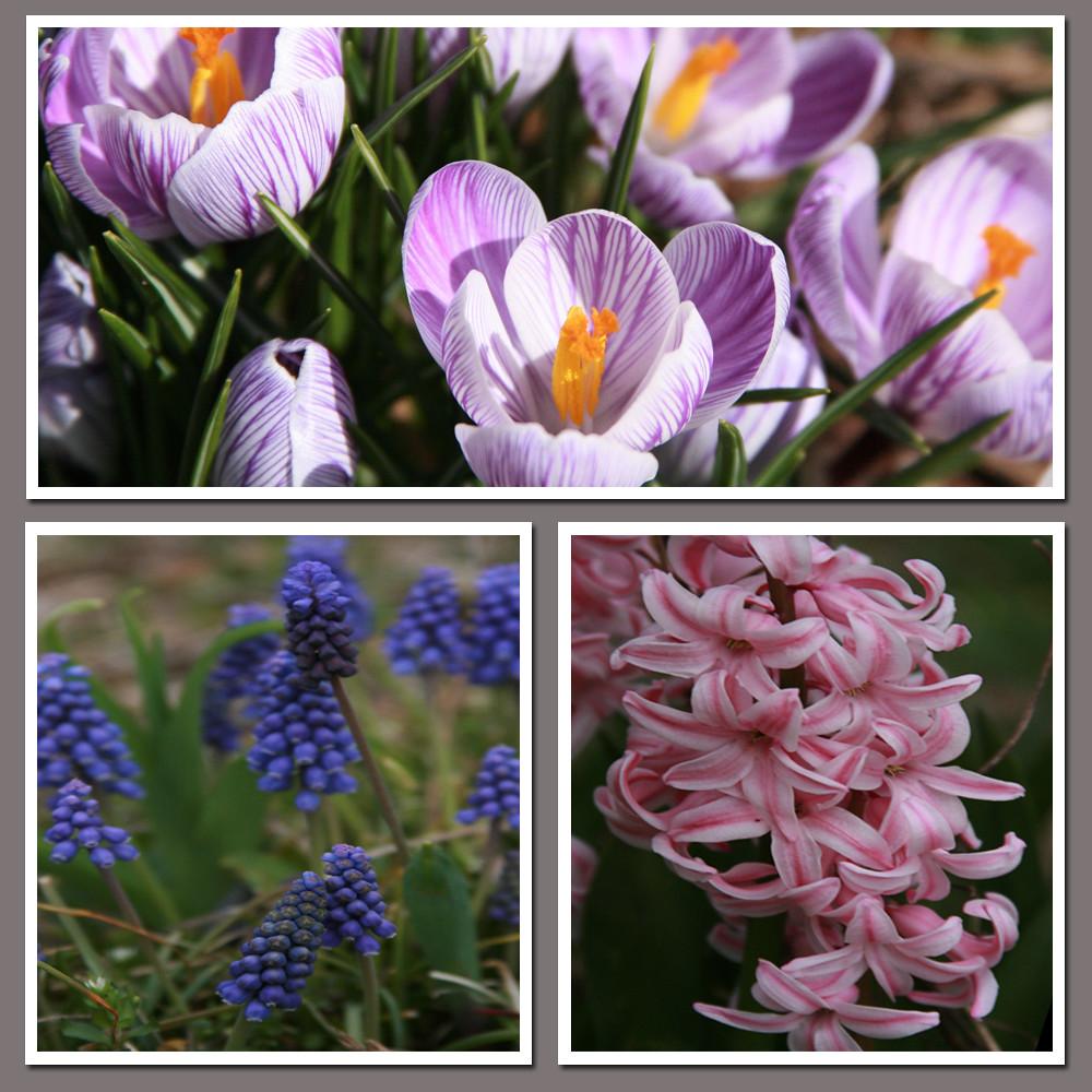 Spring has Sprung I