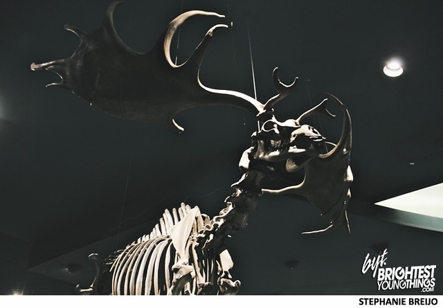 Smithsonian Dinosaur Exhibit Photos Brightest Young Things Stephanie Breijo34